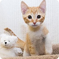 Adopt A Pet :: Bristol - Irvine, CA