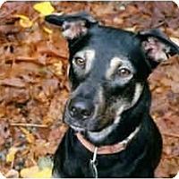 Adopt A Pet :: Jessie - BC Wide, BC