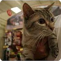Adopt A Pet :: Gabby - Orlando, FL