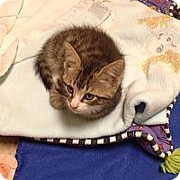 Adopt A Pet :: Peanut - Island Park, NY