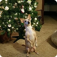 Adopt A Pet :: Lulu - Homewood, AL