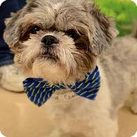 Adopt A Pet :: Oscar - Rockaway, NJ
