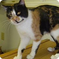 Adopt A Pet :: Shayla - Hamburg, NY