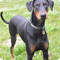Adopt A Pet :: Floki - Fort Worth, TX