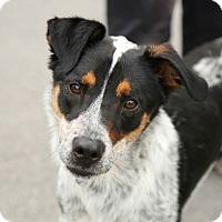Adopt A Pet :: Roxie - Rochester/Buffalo, NY