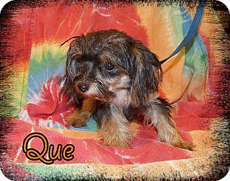 Small Dog Puppy Rescue Central Fl