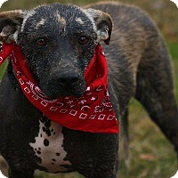 Adopt A Pet :: Charlotte - Haggerstown, MD