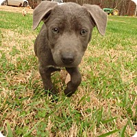 Adopt A Pet :: Elsa - Warrenton, NC