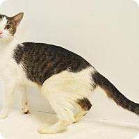 Adopt A Pet :: *MULBERRY - Sacramento, CA