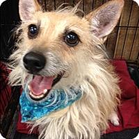 Adopt A Pet :: Rosie - Bedford, TX