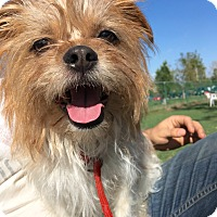 Adopt A Pet :: Mocha (Little Man) - Van Nuys, CA