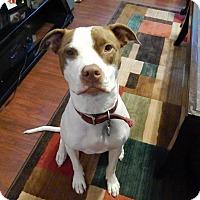 Adopt A Pet :: Libby~Courtesy Listing - Davenport, IA