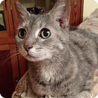 Adopt A Pet :: Shanook - Herndon, VA
