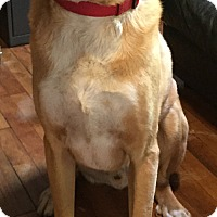 Adopt A Pet :: Ludo - Sudbury, MA