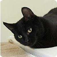Adopt A Pet :: AMY - Red Bluff, CA