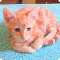 Adopt A Pet :: Junior - Palm Springs, CA
