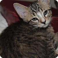Adopt A Pet :: Royce - Ridgeland, SC