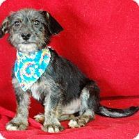 Adopt A Pet :: Nigle - Lawrenceville, GA