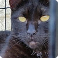 Adopt A Pet :: Midnight - Scottsboro, AL