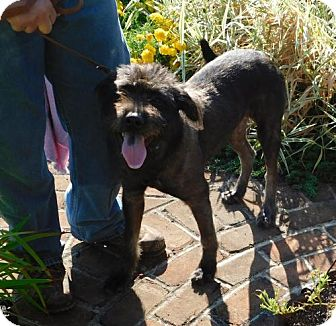 Terrier (Unknown Type, Medium) Mix Dog for adoption in Zanesville, Ohio - Cell Dog Smokey 47371