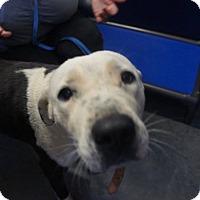 Adopt A Pet :: Gracie - Henderson, NC