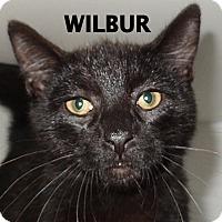 Adopt A Pet :: Wilbur - Lapeer, MI