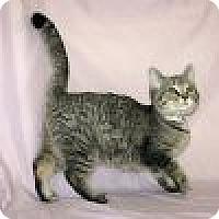 Adopt A Pet :: Nicki - Powell, OH