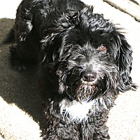Adopt A Pet :: Robbie - MEET ME - Woonsocket, RI