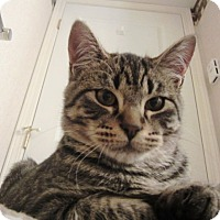 Adopt A Pet :: Harry Pawter - Vancouver, BC