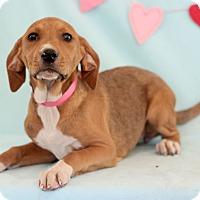 Adopt A Pet :: Valentina - Waldorf, MD