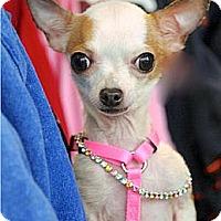 Adopt A Pet :: Nina - Mooy, AL