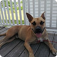 Adopt A Pet :: Hamlett Fostered in N England! - Glastonbury, CT