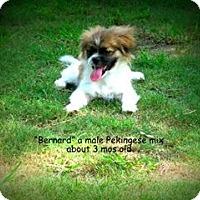 Adopt A Pet :: Bernard - Gadsden, AL