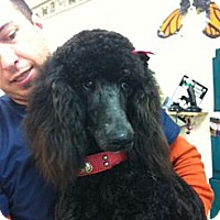 Adopt A Pet :: kayla - Goleta, CA