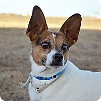 Adopt A Pet :: Rascal - Cheyenne, WY