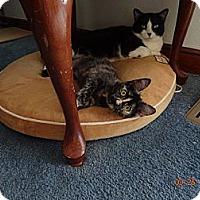 Adopt A Pet :: Madie - Saint Albans, WV