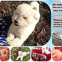 Adopt A Pet :: BLANCO - East Hanover, NJ