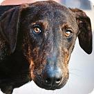 Adopt A Pet :: ARIEL VON ARNSTADT