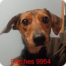 Adopt A Pet :: Patches