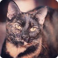 Adopt A Pet :: SK - Raleigh, NC