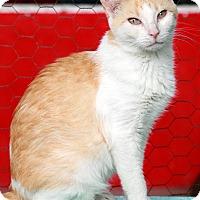 Adopt A Pet :: Louisiana - St Louis, MO