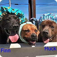 Adopt A Pet :: Huck and Finn (CNC) - Harrisonburg, VA
