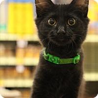 Adopt A Pet :: Monte - Sacramento, CA