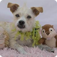 Adopt A Pet :: Emmie - San Diego, CA