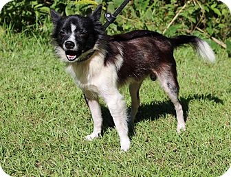 Carteret County Nc Senior Dogs For Adoption