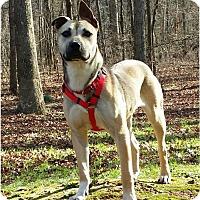 Adopt A Pet :: Evie - North Brunswick, NJ
