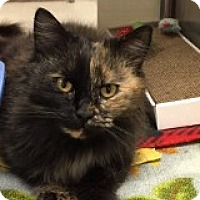 Adopt A Pet :: Adreyna - Manchester, CT