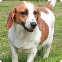 Adopt A Pet :: Harley - Foster, RI