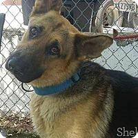 Adopt A Pet :: Triton - Meridian, ID