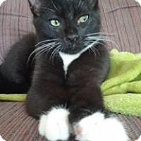 Adopt A Pet :: Radaghast - Acushnet, MA